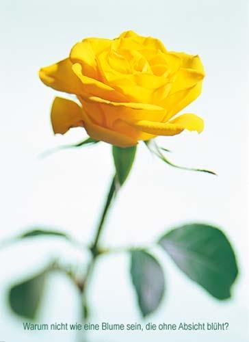 Etwas Neues genug 100 Grusskarte Gelbe Rose mit OSHO Zitat &HW_12