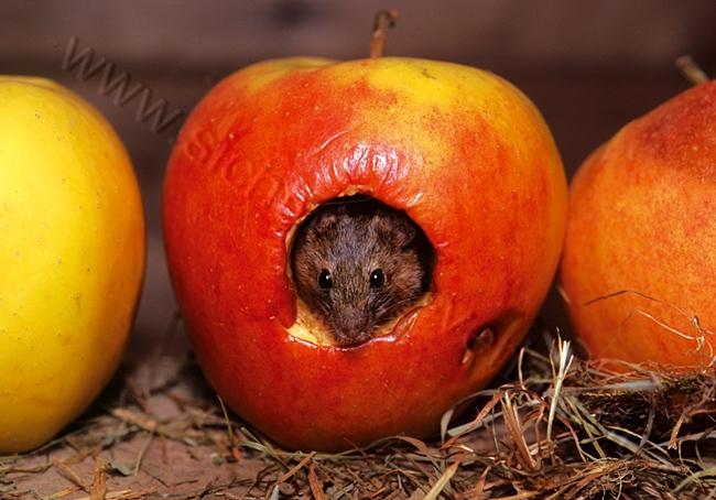 Maus Als Krafttier Grußkarte Krafttier Maus